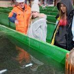 Почти 200 тысяч мальков кеты выпущено в ручей Трезубец на Камчатке по договору о компенсации